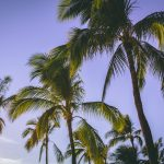 Moving to Hawaii from Japan