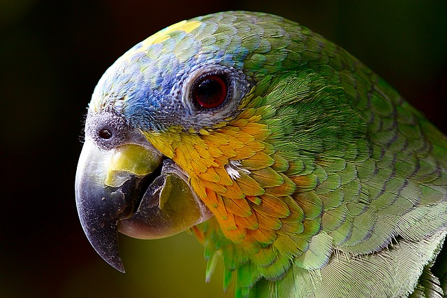 Exotic pets import regulations in Japan