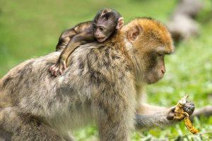 Exotic pets - monkeys