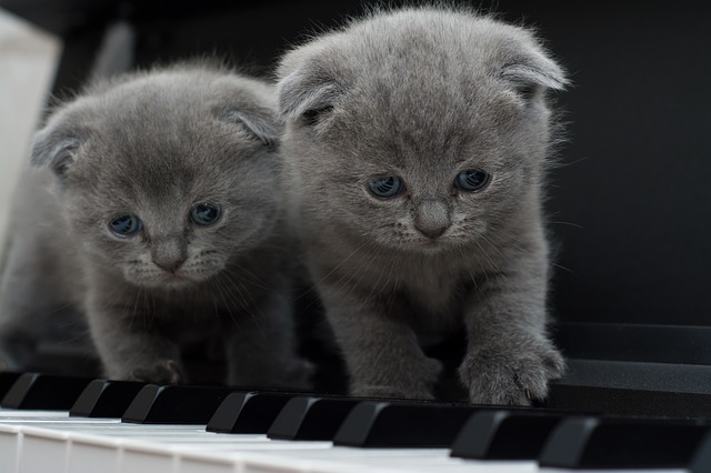 Two cats show how important is to prepare a piano for shipping