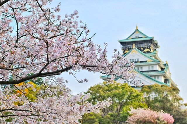 Cherry tree and a building in Japan